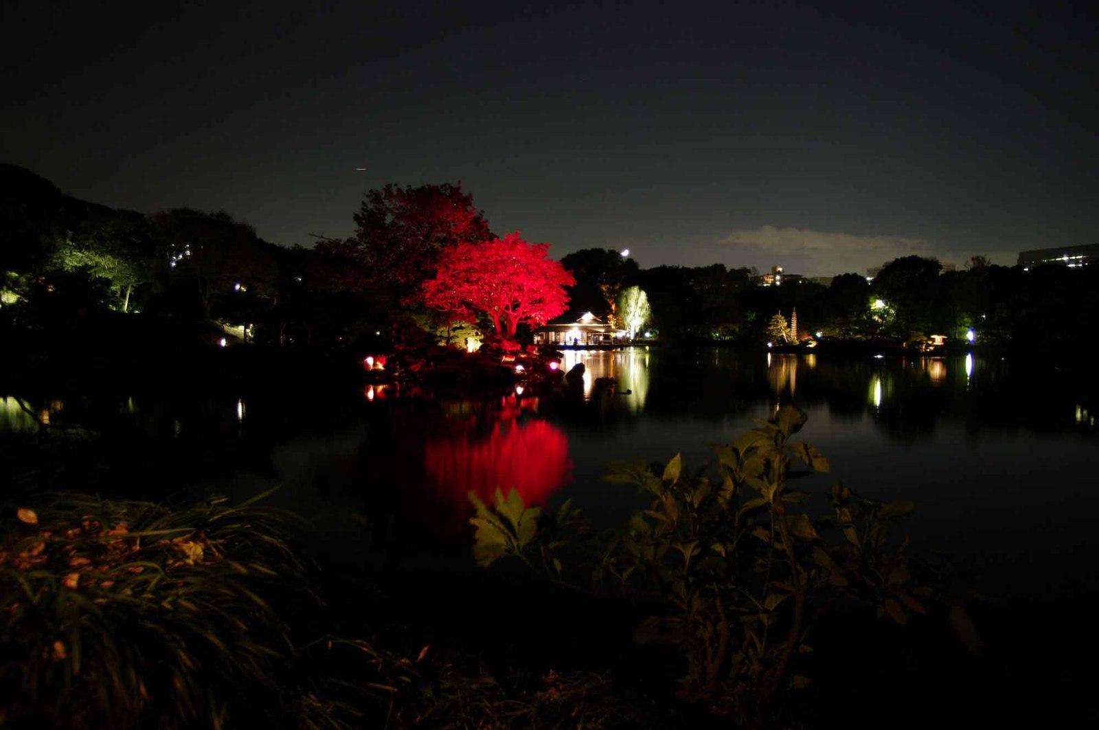 Kiyosumi_light_up2