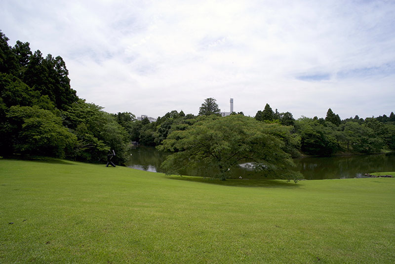 Ike_nemunoki